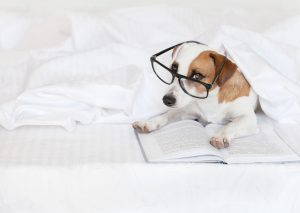 Dog with book at home. Fun pet in bed.